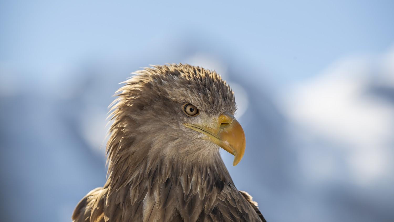 aigles-du-leman-christian-pfahl
