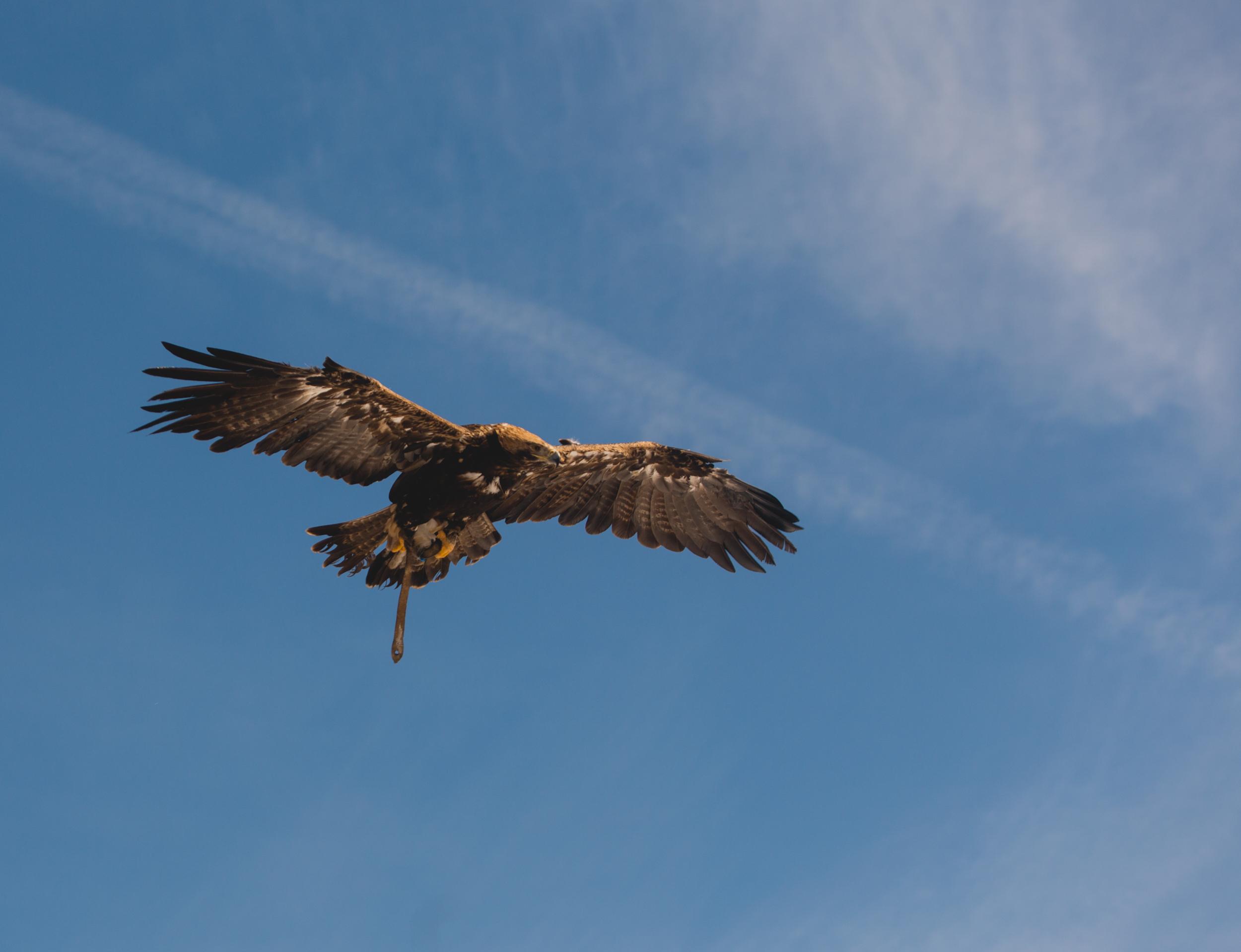Les Aigles à Morzine
