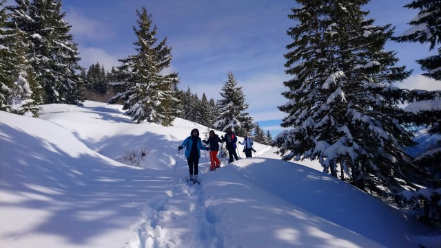 Guided snowshoeing trips